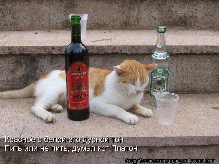 Котоматрица: Красное с белой-это дурной тон Пить или не пить, думал кот Платон