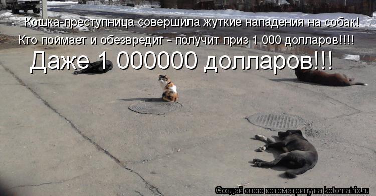 Котоматрица: Кошка-преступница совершила жуткие нападения на собак! Кто поймает и обезвредит - получит приз 1 000 долларов!!!! Даже 1 000000 долларов!!!