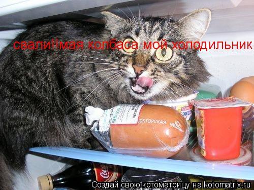 Котоматрица: свали!!мая колбаса мой холодильник тронишь укушу!!!!