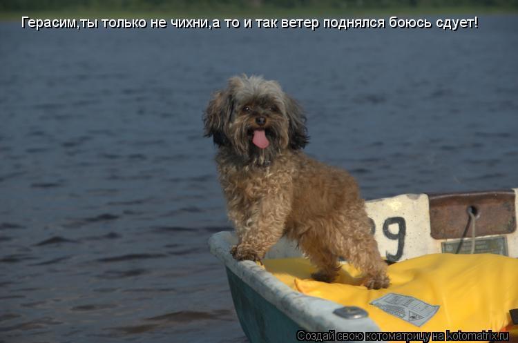 Котоматрица: Герасим,ты только не чихни,а то и так ветер поднялся боюсь сдует!