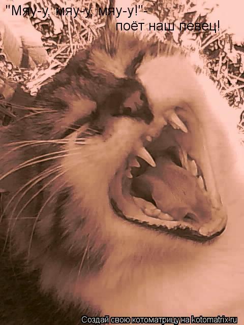 """Котоматрица: """"Мяу-у, мяу-у, мяу-у!""""- поёт наш певец!"""