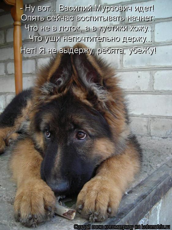 Котоматрица: - Ну вот... Василий Мурзович идет! Опять сейчас воспитывать начнет: Что не в лоток, а в кустики хожу... Что уши непочтительно держу... Нет! Я не вы