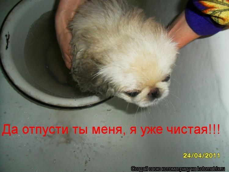 Котоматрица: Да отпусти ты меня, я уже чистая!!!