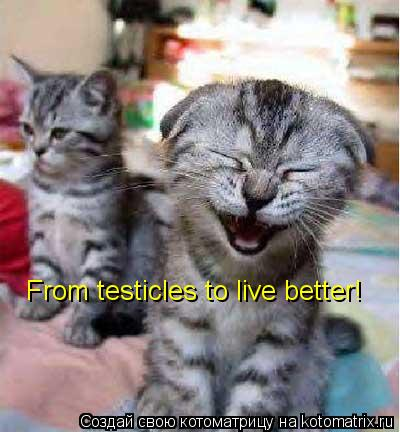 Котоматрица: From testicles to live better!