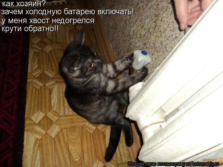 Котоматрица: как хозяин? зачем холодную батарею включать! у меня хвост недогрелся крути обратно!!