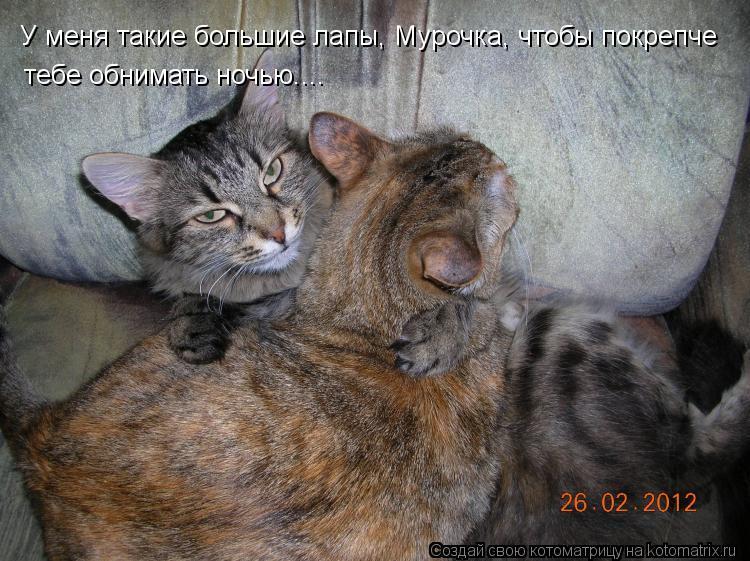 Котоматрица: У меня такие большие лапы, Мурочка, чтобы покрепче  тебе обнимать ночью....