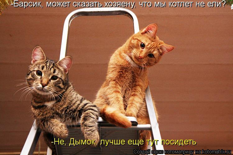Котоматрица: -Барсик, может сказать хозяену, что мы котлет не ели? -Не, Дымок, лучше еще тут посидеть