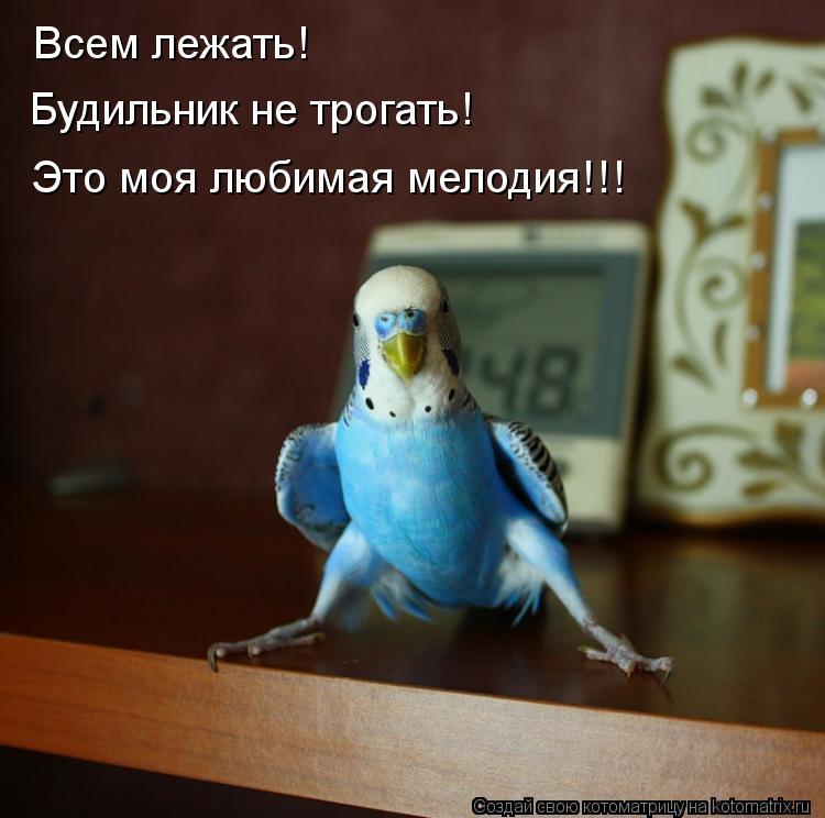 Котоматрица: Всем лежать! Будильник не трогать! Это моя любимая мелодия!!!