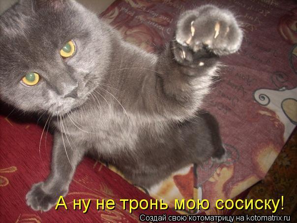 Котоматрица: А ну не тронь мою сосиску!