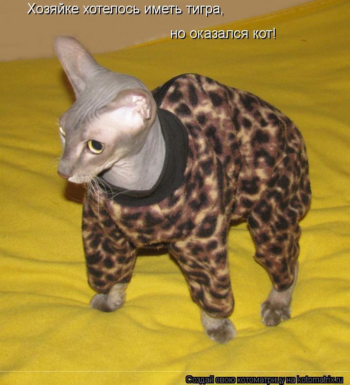 Котоматрица: Хозяйке хотелось иметь тигра, но оказался кот!