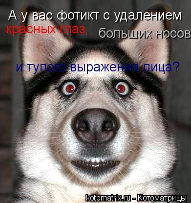 Котоматрица: красных глаз, А у вас фотикт с удалением больших носов и тупого выражения лица?