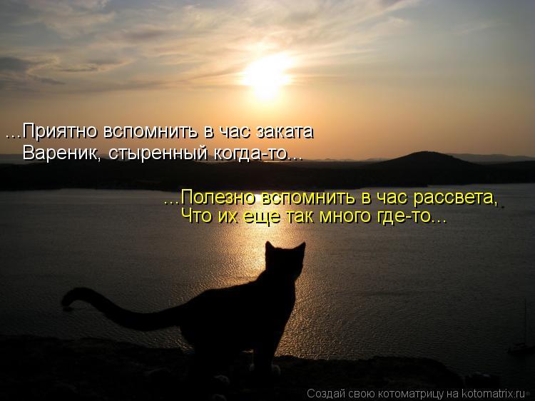 Котоматрица: ...Приятно вспомнить в час заката Вареник, стыренный когда-то... ...Полезно вспомнить в час рассвета, Что их еще так много где-то...