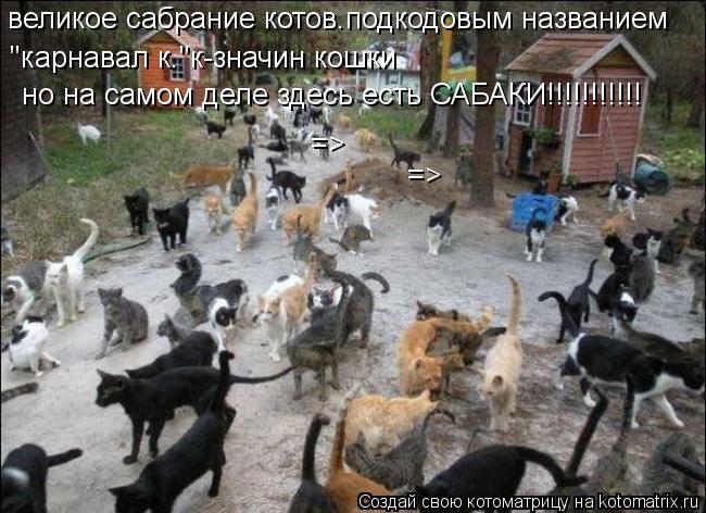 """Котоматрица: великое сабрание котов.подкодовым названием """"карнавал к.""""к-значин кошки но на самом деле здесь есть САБАКИ!!!!!!!!!!! => =>"""