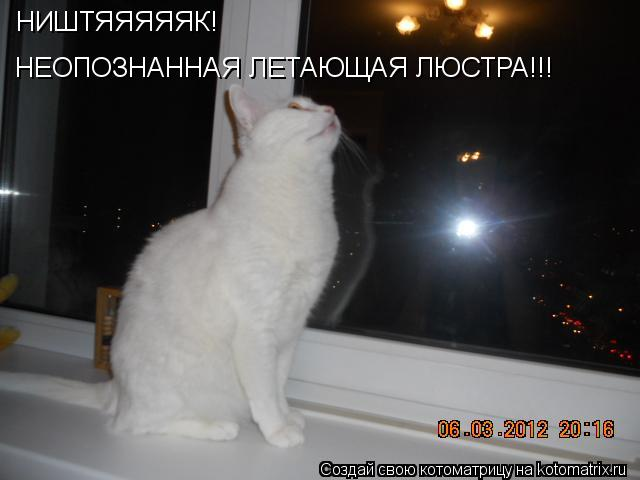Котоматрица: НИШТЯЯЯЯЯК! НЕОПОЗНАННАЯ ЛЕТАЮЩАЯ ЛЮСТРА!!!