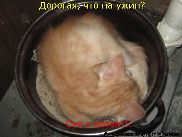 Котоматрица: Суп с котом!!! Дорогая, что на ужин?