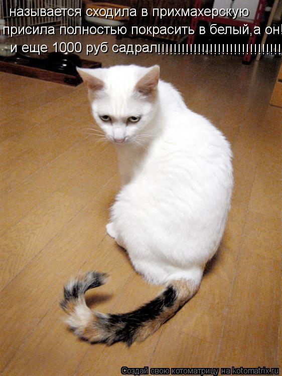 Котоматрица: называется сходила в прихмахерскую присила полностью покрасить в белый,а он!!! и еще 1000 руб садрал !!!!!!!!!!!!!!!!!!!!!!!!!!!!!!!!