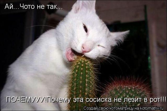 Котоматрица: Ай...Чото не так... ПОЧЕМУУУ!Почему эта сосиска не лезит в рот!!!