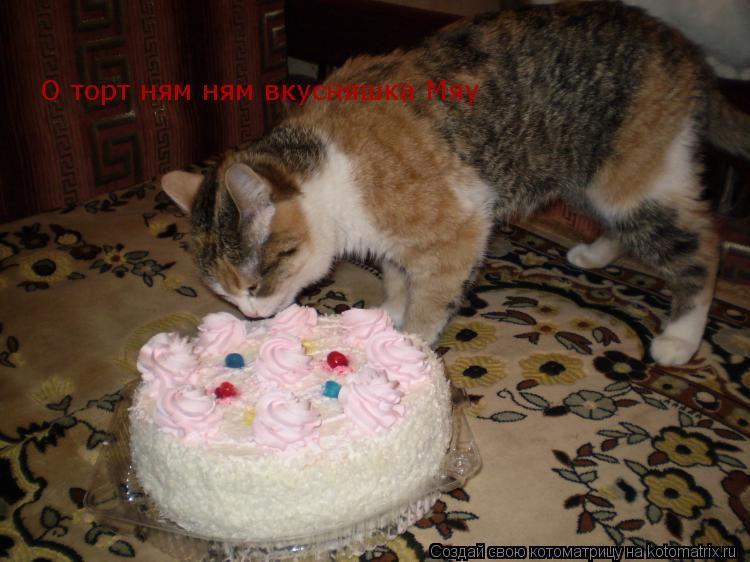 Котоматрица: О торт ням ням вкусняшка Мяу