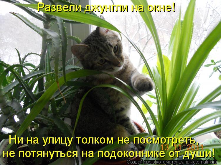 Котоматрица: Развели джунгли на окне! не потянуться на подоконнике от души! Ни на улицу толком не посмотреть,