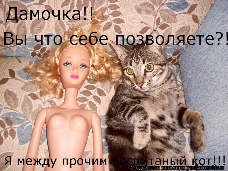 Котоматрица: Дамочка!! Вы что себе позволяете?! Я между прочим воспитаный кот!!!