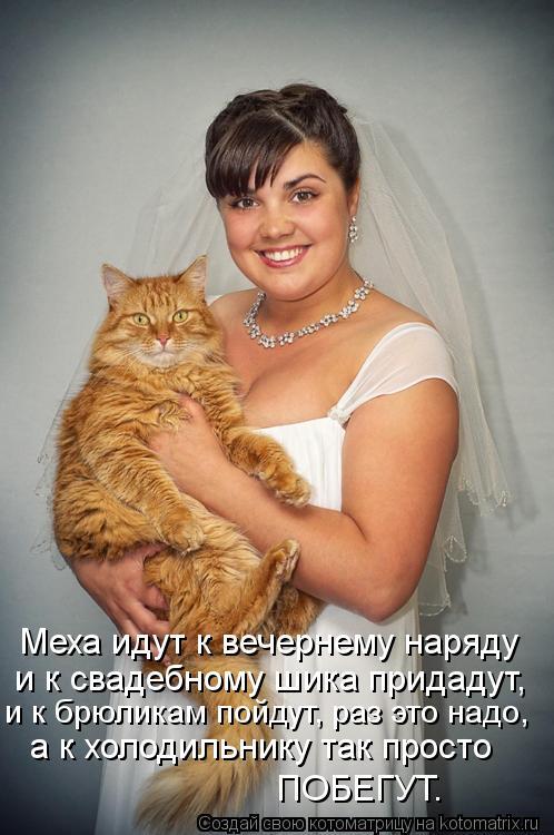 Котоматрица: Меха идут к вечернему наряду и к свадебному шика придадут, и к брюликам пойдут, раз это надо, а к холодильнику так просто ПОБЕГУТ.