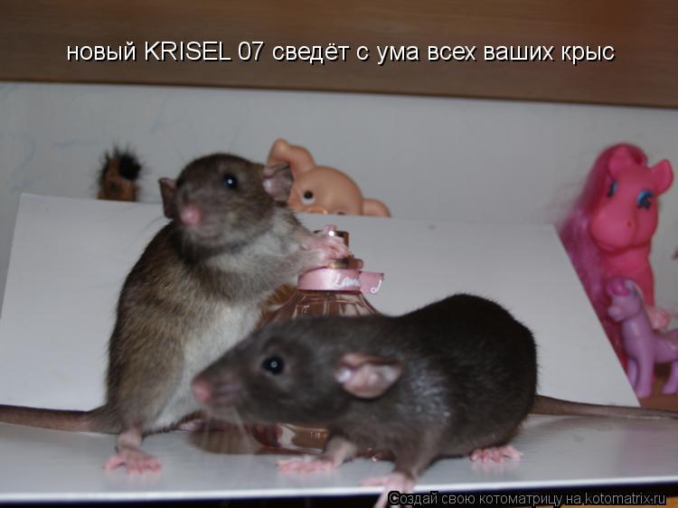 Котоматрица: новый KRISEL 07 сведёт с ума всех ваших крыс