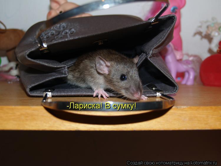 Котоматрица: -Лариска! В сумку!