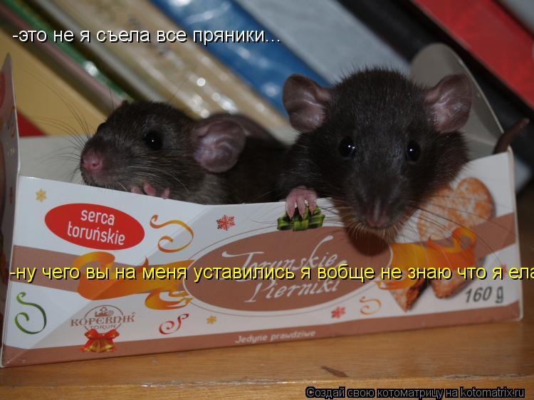 Котоматрица: -это не я съела все пряники... -ну чего вы на меня уставились я вобще не знаю что я ела