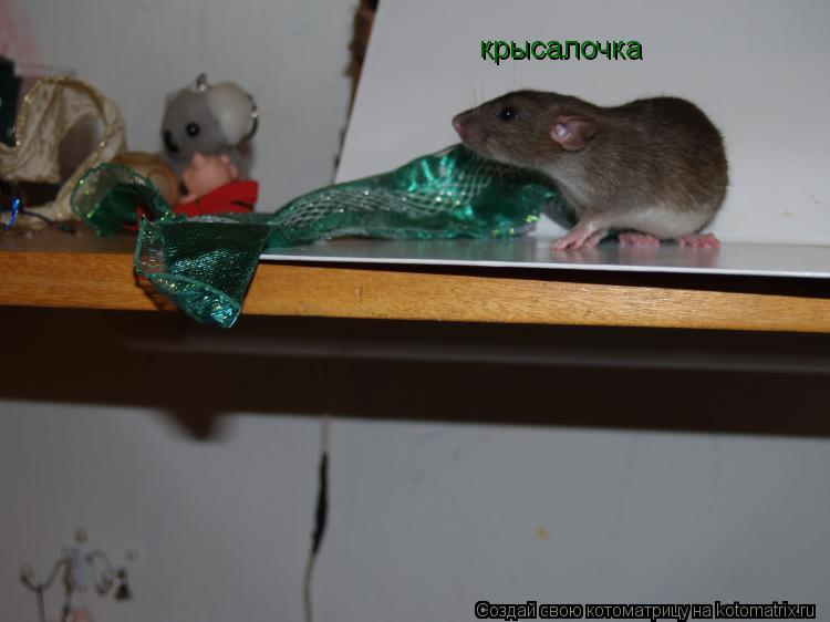 Котоматрица: крысалочка