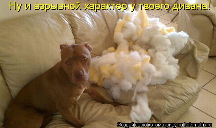Котоматрица: Ну и взрывной характер у твоего дивана!