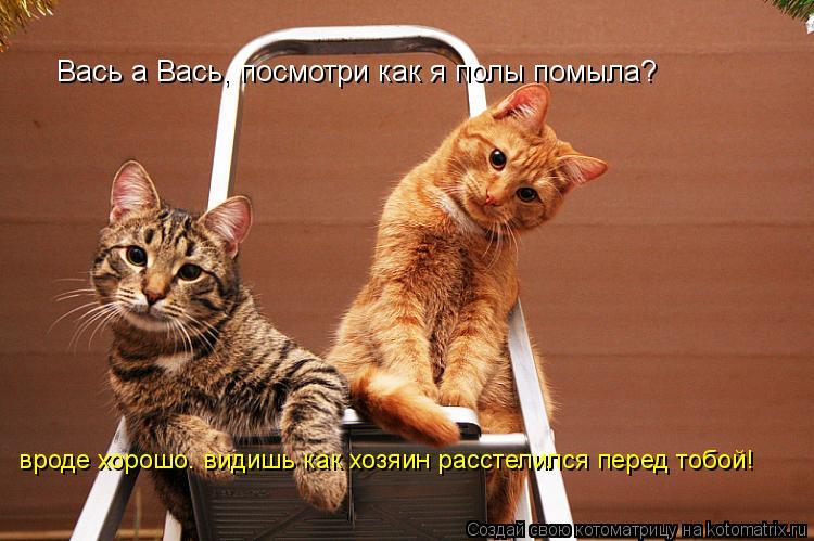 Котоматрица - Вась а Вась, посмотри как я полы помыла? вроде хорошо. видишь как хозя