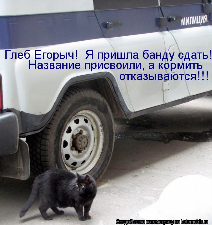 Котоматрица: Глеб Егорыч!  Я пришла банду сдать!  отказываются!!! Название присвоили, а кормить