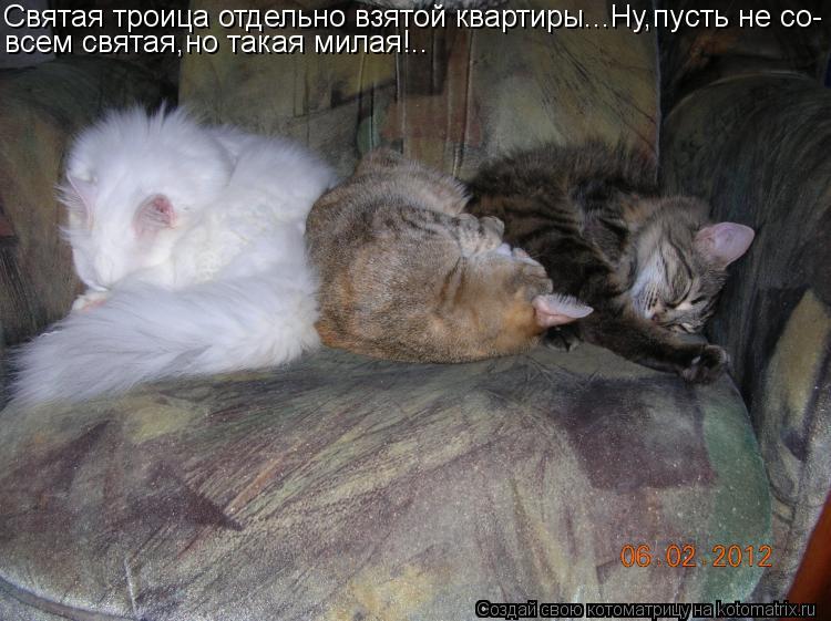 Котоматрица: Святая троица отдельно взятой квартиры...Ну,пусть не со- всем святая,но такая милая!..