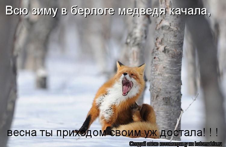Котоматрица: Всю зиму в берлоге медведя качала,  весна ты приходом своим уж достала! ! !  весна ты приходом своим уж достала! ! !