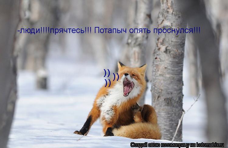 Котоматрица: -люди!!!!прячтесь!!! Потапыч опять проснулся!!! )) )) ))