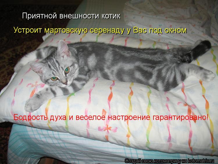 Котоматрица: Приятной внешности котик Устроит мартовскую серенаду у Вас под окном Бодрость духа и веселое настроение гарантировано!