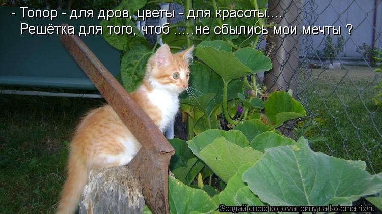 Котоматрица: - Топор - для дров, цветы - для красоты....  Решётка для того, чтоб  .....не сбылись мои мечты ?