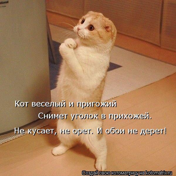 Котоматрица: Кот веселый и пригожий   Снимет уголок в прихожей. Не кусает, не орет. И обои не дерет!