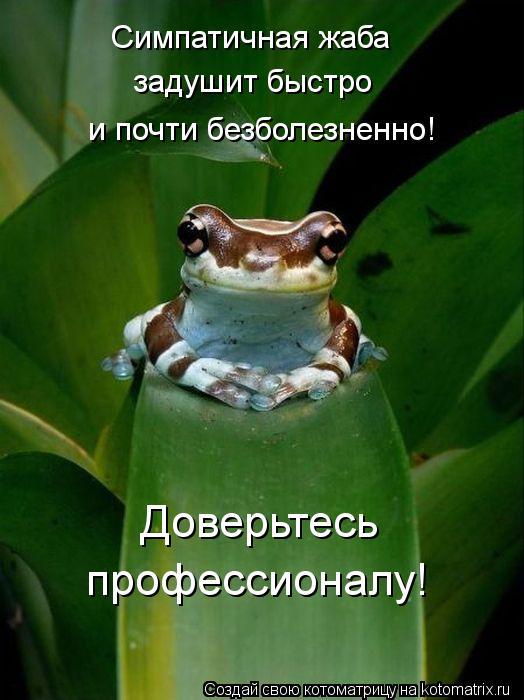 Котоматрица: Симпатичная жаба задушит быстро и почти безболезненно! Доверьтесь профессионалу!