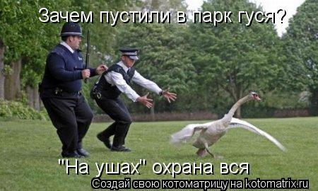 """Котоматрица: Зачем пустили в парк гуся?  """"На ушах"""" охрана вся"""