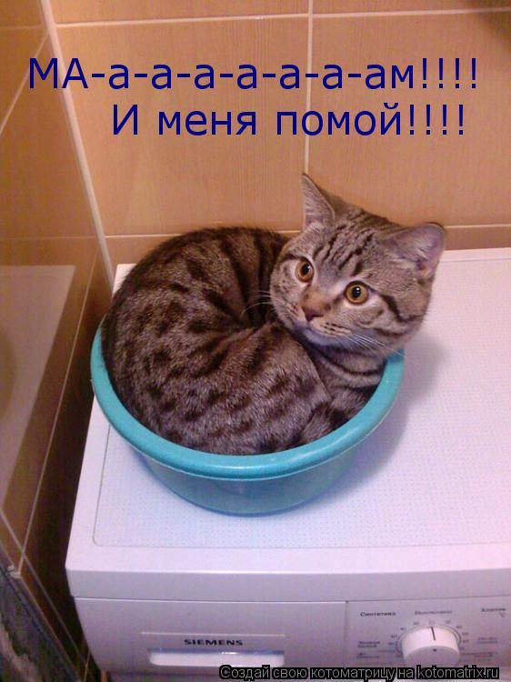 Котоматрица: МА-а-а-а-а-а-а-ам!!!!  И меня помой!!!!