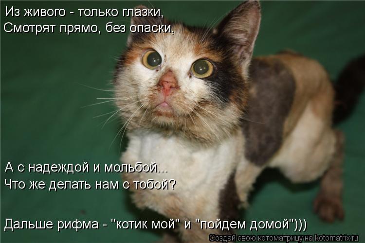 """Котоматрица: Из живого - только глазки,  Смотрят прямо, без опаски, А с надеждой и мольбой... Что же делать нам с тобой? Дальше рифма - """"котик мой"""" и """"пойдем до"""