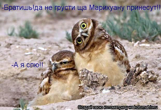 Котоматрица: -Братишь!да не грусти ща Марихуану принесут!! -А я спю!!