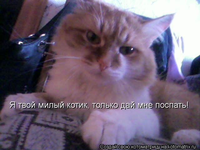 Котоматрица: Я твой милый котик, только дай мне поспать!