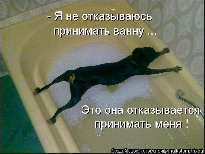 Котоматрица: принимать ванну ... - Я не отказываюсь  Это она отказывается  принимать меня !