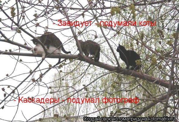 Котоматрица: - Каскадеры - подумал фотограф - Завидует - подумали коты