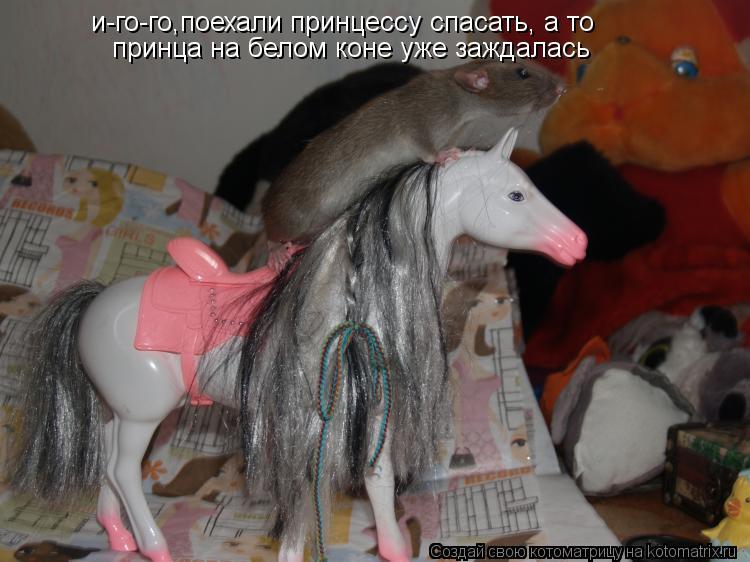 Котоматрица: и-го-го,поехали принцессу спасать, а то  принца на белом коне уже заждалась