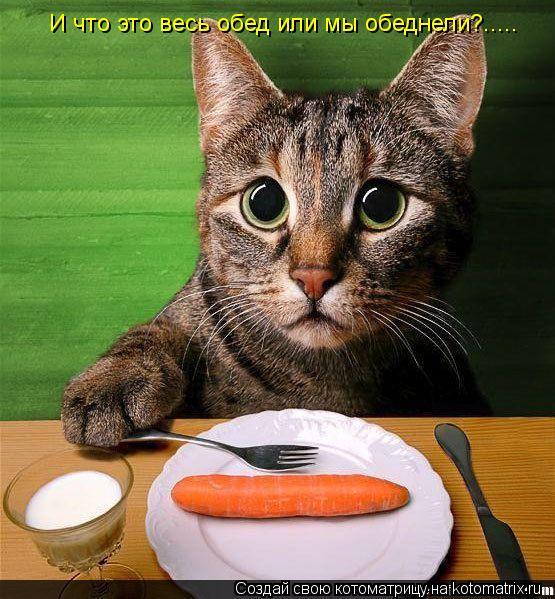 Котоматрица: И что это весь обед или мы обеднели?.....