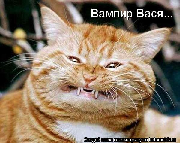 Котоматрица: Вампир Вася...