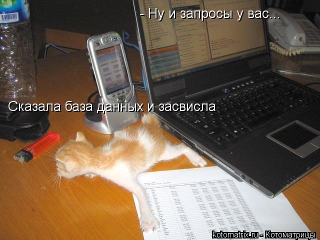 Котоматрица: - Ну и запросы у вас... Сказала база данных и засвисла
